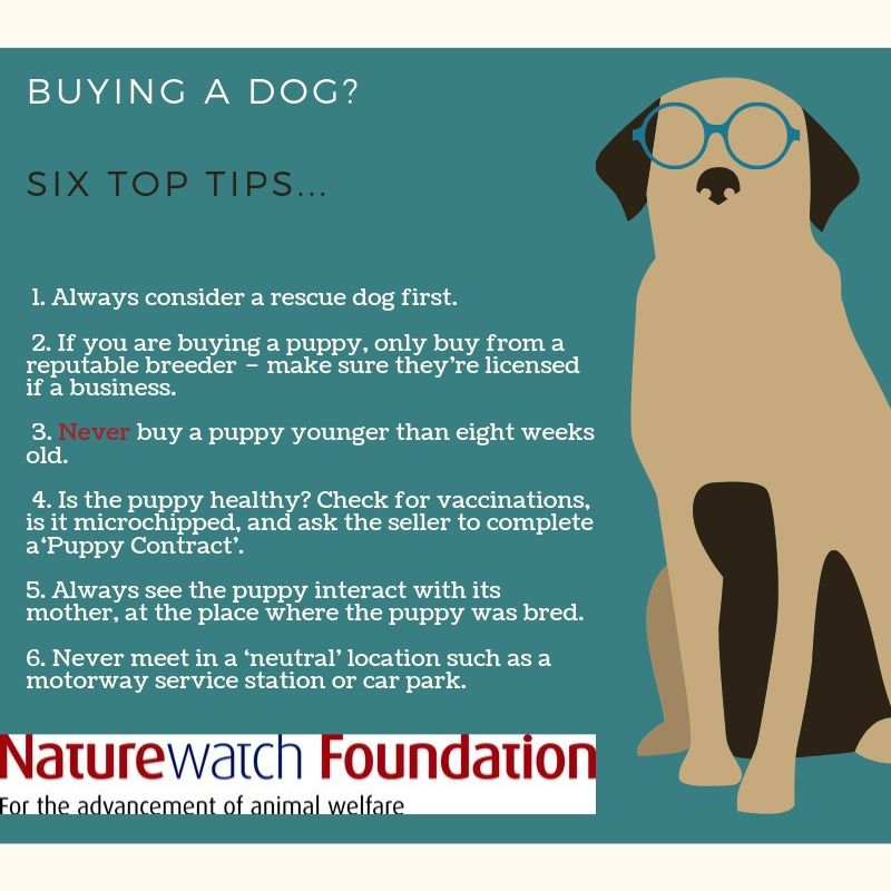 Tips when buying a dog