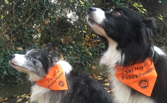 Say no to puppy farming dog bandana