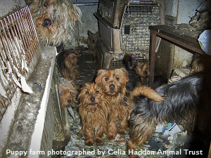 Puppy Farming In The Uk Naturewatch