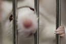 Animals used in British experiments in 2016