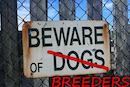 Dangerous Dog Laws have been updated – but will attacks stop?