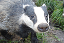 Speak up for the Badgers