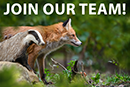 We are hiring - Wildlife Crime Campaigner / Campaign Manager