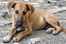Stop the mass euthanasia of dogs in Ukraine
