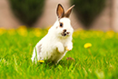YOU DID IT! Natura confirms cruelty-free animal testing policy!