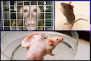 Government breaks its promise as animal experiments continue to soar