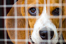 Let's call time on animal experiments