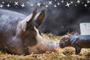Stories of hope for animals this Christmas…