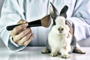 Fantastic news for cruelty-free cosmetics