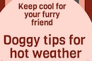 Doggy tips for hot weather