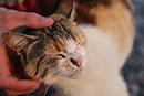 Fantastic news for animals in Ukraine!
