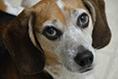 MPs Urged To End Secrecy In Animal Experiments