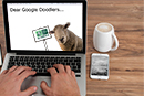 Support our World Animal Day Google Doodle campaign!