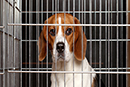 Say NO to beagle breeding facility