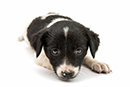 Ban on the commercial third-party sales of puppies and kittens in England