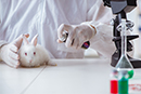 Animal Testing Public Attitudes Shifting