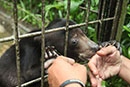Building a future in the wild for rescued sun bears
