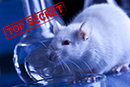 This is what you're not allowed to know about animal experiments